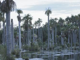 Lagoa das Araras bei Nobres