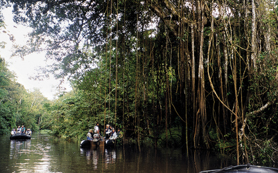 im Amazonas