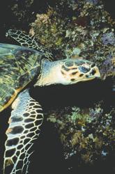 Unterwasserwelt Fernando de Noronha