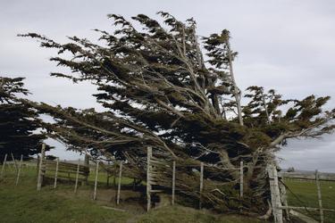 Windgepeitschter Baum in Patagonien