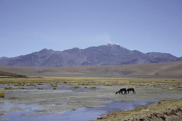 Lagune in der Atacama-Wüste