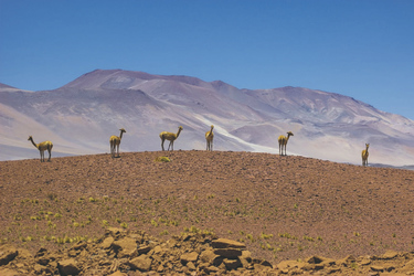 im Altiplano
