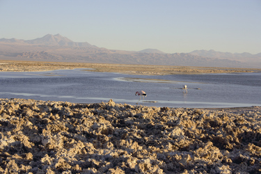 Salar de Atacama, ©Anja Hofer