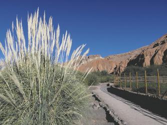 im Garten des Hotels Alto Atacama