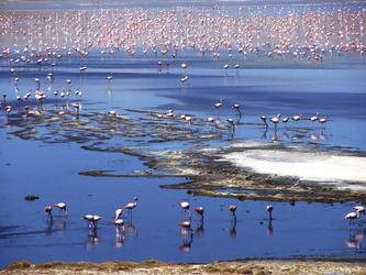 Flamingos in einer Hochlandlagune, ©explora Chile