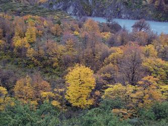 Herbst im Torres del Paine