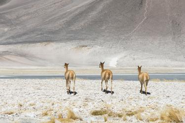 Ausflug ins Altiplano