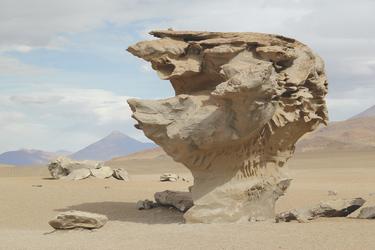 Steinbaum in der Siloli-Wüste, ©explora