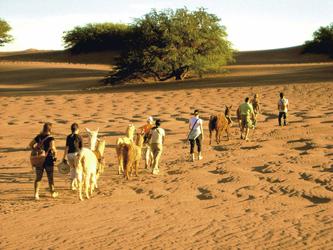 Wanderung mit Lamas