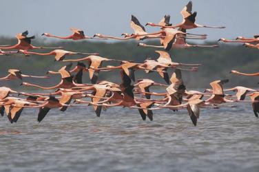 Flamingos im Hinterland der Küste