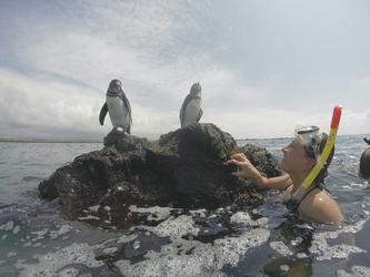 Pinguine ganz nah