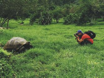 Riesenschildkröte im Hochland