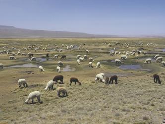 zwischen Arequipa und Colca