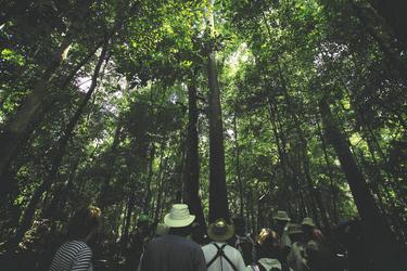 Regenwaldwanderung ©Jungle Experiences, ©Jungle Experiences