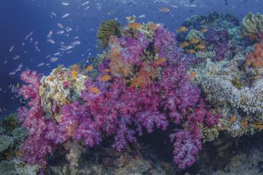 Bunte Korallenwelt