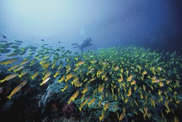 Aktives Treiben unter Wasser