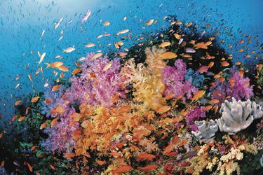 Bunte Unterwasserwelt Fiji