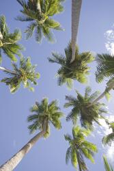 ©Three Loose Coconuts