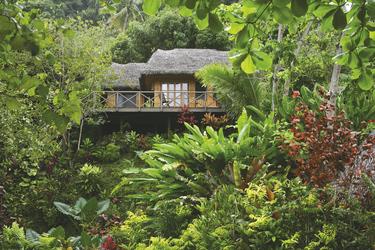Treehouse Matangi