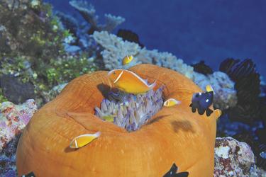 Unterwasserwelt Neukaledonien © P. Laboute-NCTPS