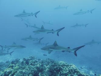 Auf Du und Du mit Haien
