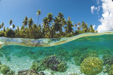 Korallengarten Le Tahaa