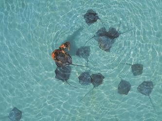 Schwimmen mit Rochen, ©InterContinental Moorea