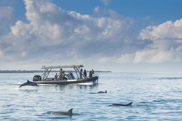 Bootsausflug zu den Delfinen, ©Jocelyn Pride