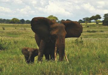 Genau wie die Mama, ©Tanganyika Expeditions