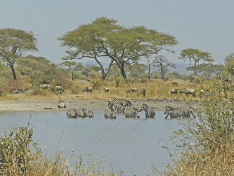 Im Tarangire Nationalpark