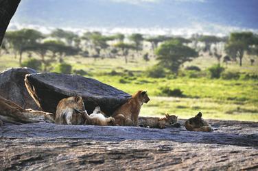 Auf dem Aussichtsdeck, ©Tanzania-Experience