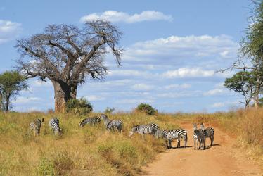 Unterwegs im Tarangire Nationalpark, ©Marie Scholz, DIAMIR Erlebnisreisen