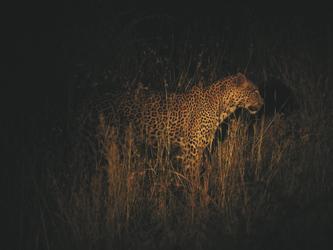 Nachtsafari, ©AfriPassion