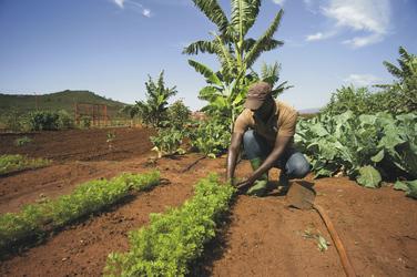 Eigener Gemüsegarten in der Bashay Rift Lodge, ©Bashay Rift Lodge