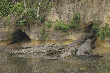 Krokodile im Katavi NP, ©Mbali Mbali