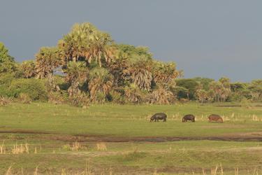 Landschaft im Katavi NP, ©Mbali Mbali
