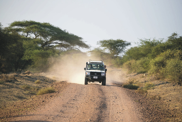 Auf Safari, ©Wilkinson Tours