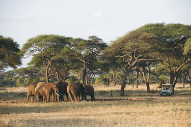 Auf Safari im Tarangire NP, ©Sanctuary Retreats