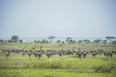 Die Herden der großen Migration, ©Sanctuary Retreats