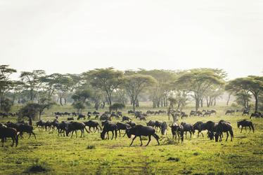 Die große Migration, ©Sanctuary Retreats