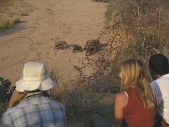 Elefanten beobachten im Selous National Park