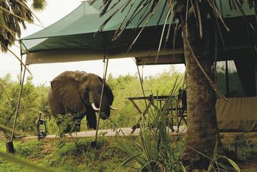 Ein Elefant schaut im Camp vorbei