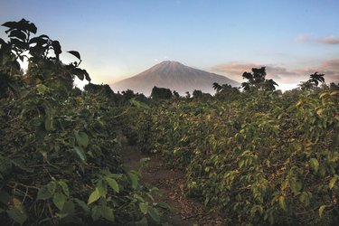 Arusha Coffee Lodge - Blick auf den Mount Meru