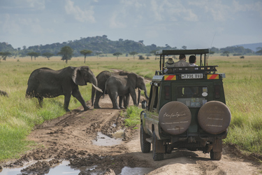 Begegnung bei einer Safari, ©Niels van Gijn / Silverless