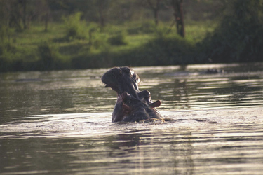 Imposante Fotoeindrücke, ©Tanganyika Expeditions