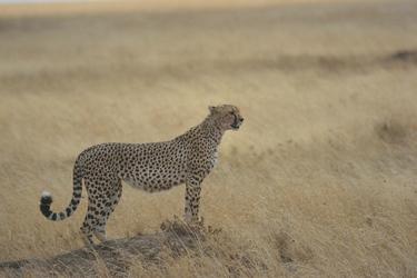 Jäger in der Savanne, ©Tanganyika Expeditions