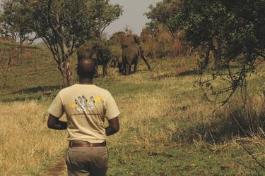 Mit dem Guide auf Fußpirsch, ©Grumeti Hills