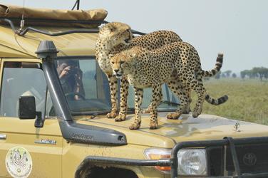 Näher werden Sie kaum kommen, ©Tanganyika Expeditions
