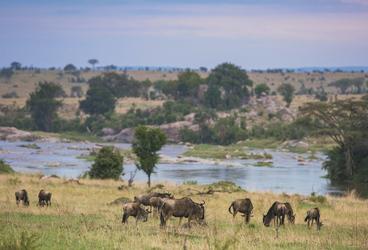 Tierparadies am Mara Fluss