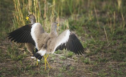 Entdecken Sie die vielfältige Vogelwelt, ©Tanganyika Expeditions